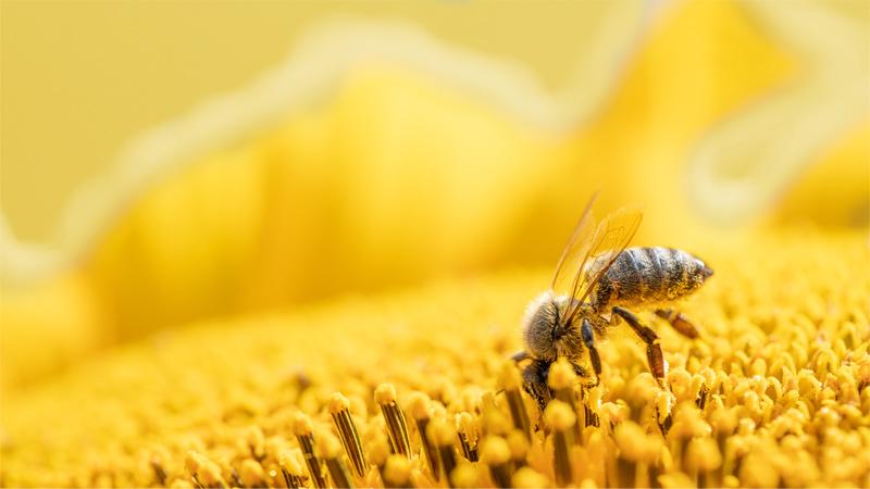 蜂王乳怎麼選?為何我吃蜂王乳沒效?營養師說出蜂王乳功效的真相!